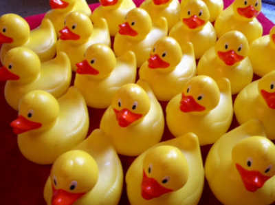 Small duck race